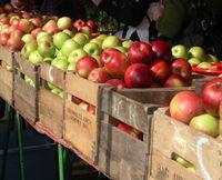 Apples3, farmers market, DC-Ellen Perlman