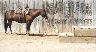 Horsesign