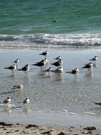 Birds and green ocean-Ellen Perlman