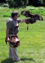 Falconer Bob Leonard and Thunder-Ellen Perlman