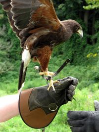 Bird in hand, falconry, Hershey, boldlygosolo
