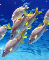 Georgia Aquarium-Ellen Perlman