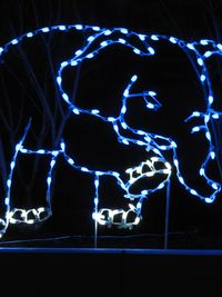 Baby elephant,  Zoo Lights, DC, boldlygosolo