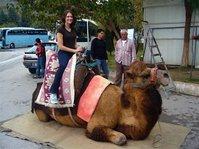 On_camel